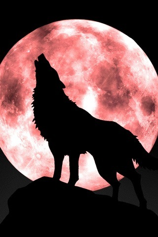Howling_wolf_moon_1_